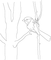 Northern chickadee coloring page, LeeHansen.com Canada pages